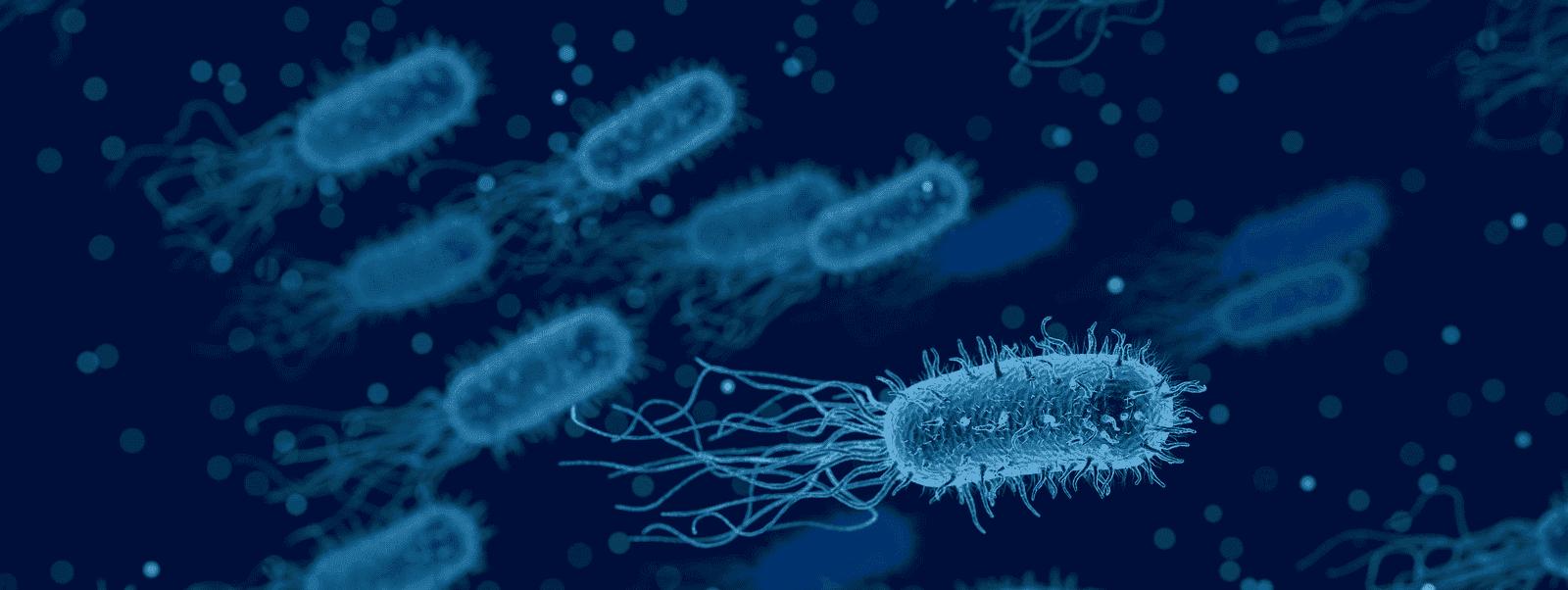 Wenerologia